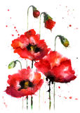 Bloemen van de waterverf hand-drawn papaver Stock Foto