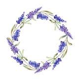 Bloemen van de waterverf de purpere lavendel Bloemen botanische bloem Het ornamentvierkant van de kadergrens stock illustratie