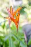Bloemen van de Zomer Royalty-vrije Stock Afbeelding