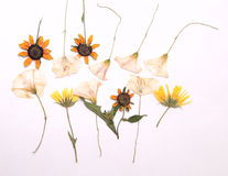 Bloemen van de zomer Stock Foto's