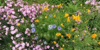 Bloemen van de Zomer Heldere wildflowers op de achtergrond van groen gras stock afbeeldingen