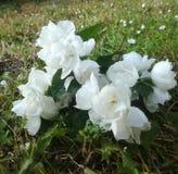 Bloemen van Denemarken stock afbeeldingen