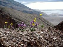 Bloemen van Doodsvallei, Californië Royalty-vrije Stock Foto