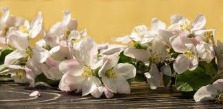Bloemen van een appel in de lente Royalty-vrije Stock Afbeelding