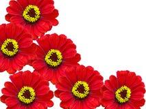 Bloemen van een bed Stock Foto's