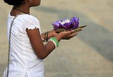 Bloemen van een lotusbloem in handen Royalty-vrije Stock Foto