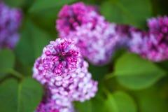 Bloemen van een sering Royalty-vrije Stock Afbeeldingen
