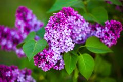 Bloemen van een sering Royalty-vrije Stock Fotografie