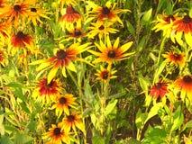 Bloemen van enorme gebieden stock foto