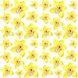 Bloemen van gele orchideeën, patroon voor druk De illustratie van de waterverf Stock Foto