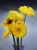 Bloemen van Gerbera Daisy Stock Afbeeldingen
