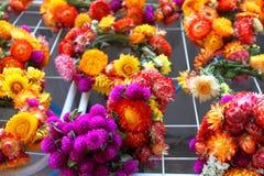 Bloemen van immortelle Royalty-vrije Stock Foto's