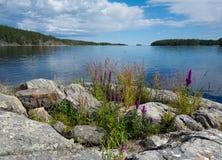 Bloemen van Kareliya Stock Foto's