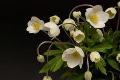 Bloemen van klokjes royalty-vrije stock afbeeldingen