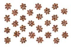Bloemen van koffie Royalty-vrije Stock Afbeelding