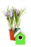 Bloemen van krokussen en klein vogelhuis royalty-vrije stock foto's