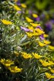 Bloemen van Lentetijd Stock Foto's