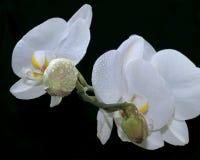 bloemen van liefde stock foto's