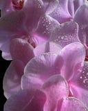 bloemen van liefde royalty-vrije stock afbeelding