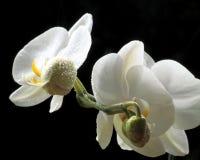 bloemen van liefde stock afbeelding