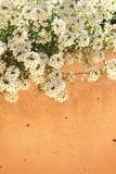 Bloemen van lungwort Royalty-vrije Stock Fotografie