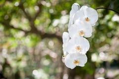 Bloemen van orchidee Royalty-vrije Stock Afbeeldingen