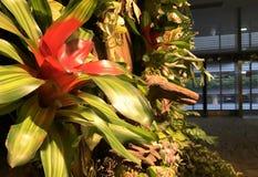 Bloemen van Singapore Stock Fotografie