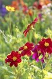 Bloemen van Tuin Stock Foto