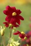 Bloemen van Tuin Stock Afbeeldingen