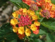 Bloemen van vele kleuren royalty-vrije stock foto