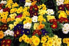 Bloemen van verschillende kleuren Stock Afbeeldingen