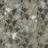 Bloemen van witlof Stock Afbeelding