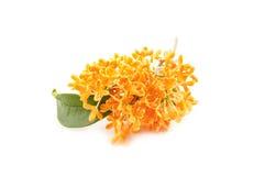 Bloemen van zoete osmanthus stock afbeelding