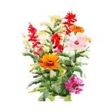 Bloemen, vectorillustratie Stock Foto's