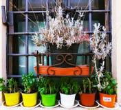 Bloemen in venster royalty-vrije stock afbeelding