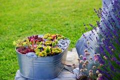 Bloemen verfraaide tuin stock afbeeldingen