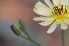 Bloemen in volledige bloei Stock Afbeeldingen