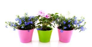 Bloemen voor de tuin royalty-vrije stock fotografie