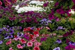 Bloemen voor het balkon Stock Foto