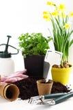 Bloemen voor het planten stock fotografie