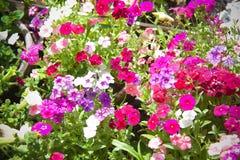 Bloemen voor mooie achtergrond stock foto