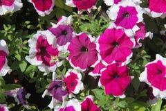 Bloemen voor mooie achtergrond stock fotografie