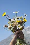 Bloemen voor u Stock Foto