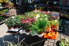 Bloemen voor verkoop Royalty-vrije Stock Afbeelding