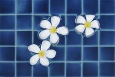 Bloemen in water stock foto