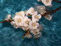 Bloemen in water Stock Foto's