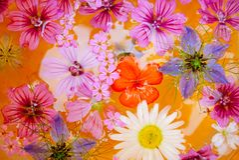 Bloemen in water royalty-vrije stock foto