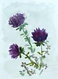 Bloemen, waterverf het schilderen Royalty-vrije Stock Afbeelding