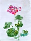 Bloemen, waterverf het schilderen Royalty-vrije Stock Foto's