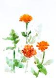 Bloemen, waterverf het schilderen Royalty-vrije Stock Afbeeldingen